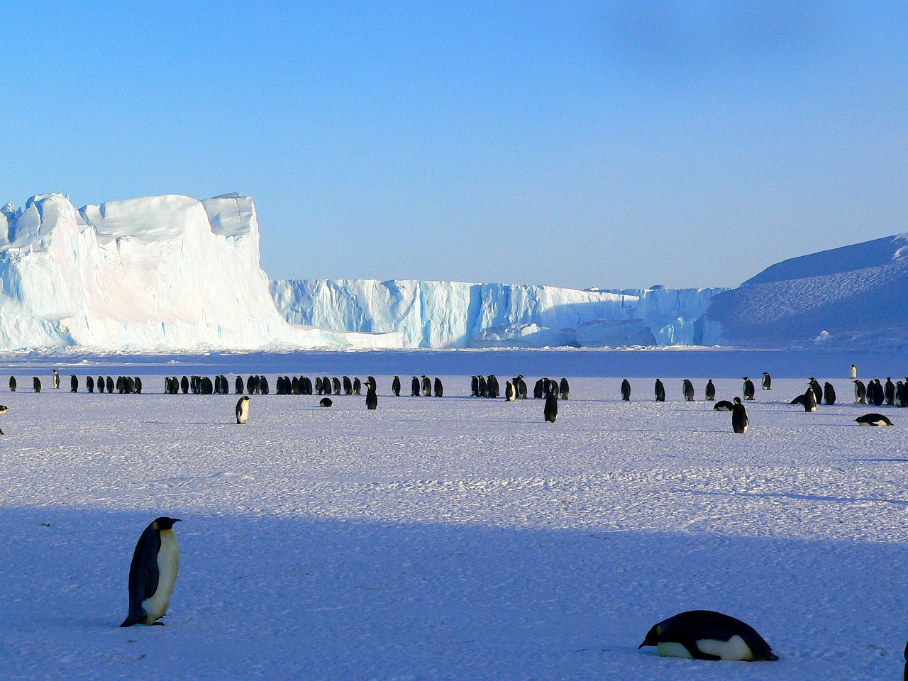 penguins-429136_1280
