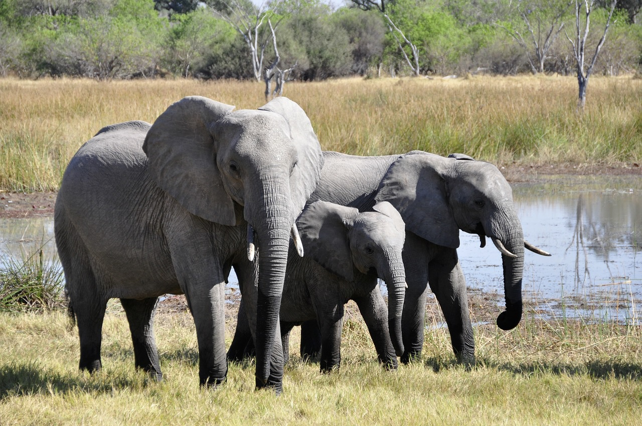Most of Africa's Best Family Destinations offer opportunities to see elephants in their natural environment